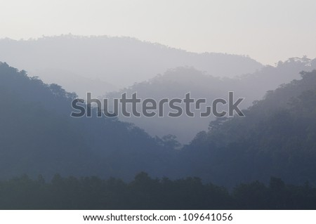 misty early morning forest with a bit of sunlight - stock photo