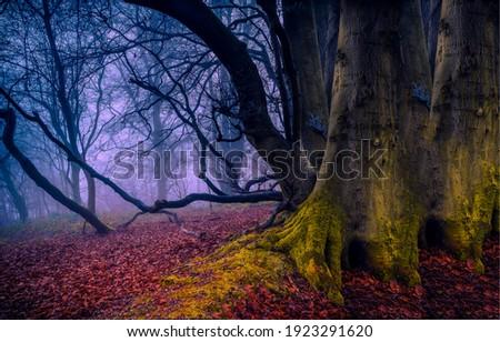 Misty fairy forest in autumn scene. Fairy forest mist. Fairy forest. Forest tree trunk in autumn mist
