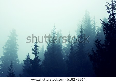 Misty fog in fir forest on mountain slopes. Color toning.