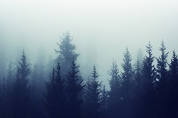 Misty fog in pine forest on mountain slopes. Color toning.