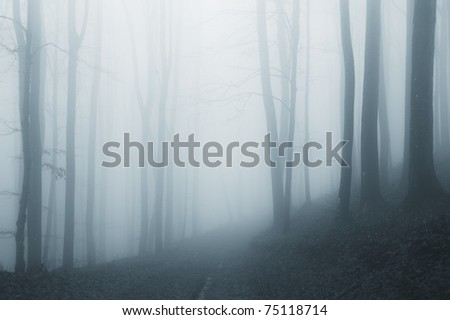 misty forest after rain