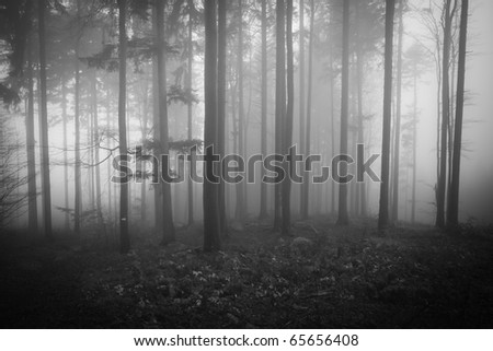 misty forest at dawn in the autumn #65656408
