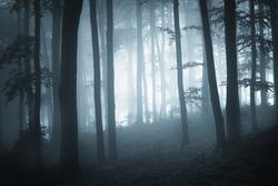 misty forest at dusk