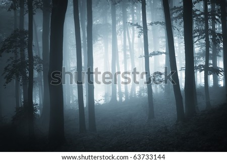 misty forest at dusk
