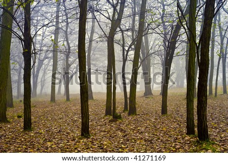 Misty forest in autumn leaves.