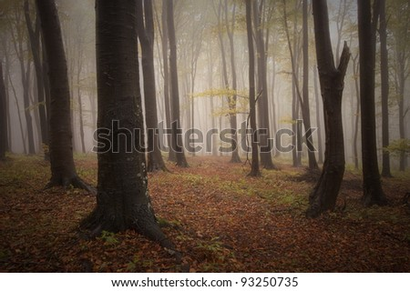 misty forest in fall