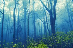 misty forest in the morning.magical nature background