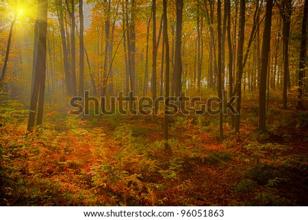 Misty forest on a early autumn morning