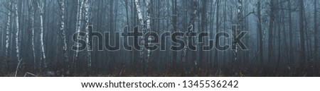 Misty forest panorama landscape #1345536242