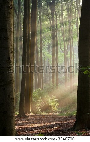 Misty forest photographed in the morning early autumn. Sun rays cross the picture. - stock photo