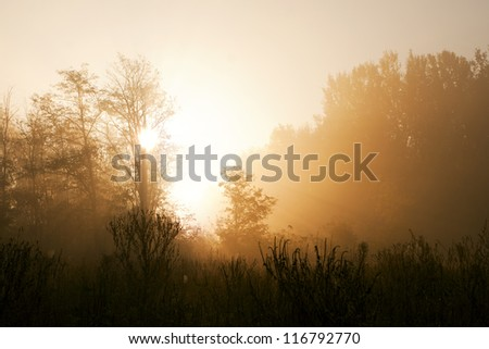 Misty forest to the rising day.
