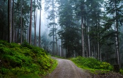 Misty forest trail view. Forest mist trail. Trail in misty forest. Forest mist trail landscape