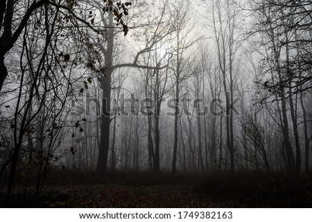 Misty forest trees silhouettes view. Autumn forest mist landscape. Misty forest trees in autumn