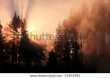 Misty forest with sunrise Yellowstone National Park, Wyoming, United States.