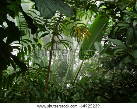 Misty jungle / rainforest scene - stock photo