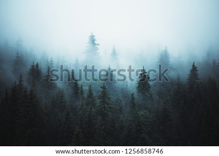 Misty landscape with fir forest in hipster vintage abstract retro style #1256858746