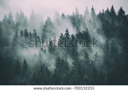 Misty landscape with fir forest in hipster vintage retro style #700132255