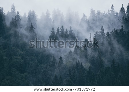 Misty landscape with fir forest in hipster vintage retro style - Shutterstock ID 701371972