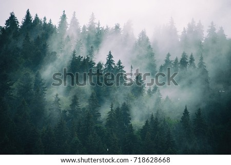 Misty landscape with fir forest in hipster vintage retro style - Shutterstock ID 718628668