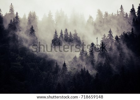 Misty landscape with fir forest in hipster vintage retro style #718659148