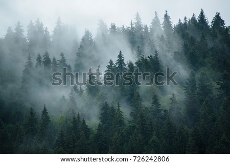 Misty landscape with fir forest in hipster vintage retro style - Shutterstock ID 726242806
