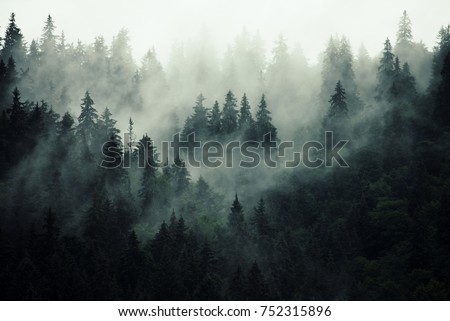 Misty landscape with fir forest in hipster vintage retro style #752315896