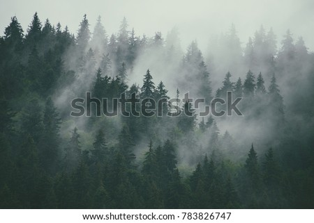 Misty landscape with fir forest in hipster vintage retro style - Shutterstock ID 783826747