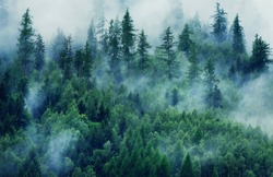 Misty landscape with fir forest. Morning fog in the mountains. Beautiful landscape with mountain view and morning fog.