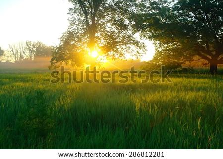 Misty meadow spring at sunrise - Shutterstock ID 286812281