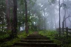 Misty monsoon morning in wilderness of tropical forests of karnataka , India