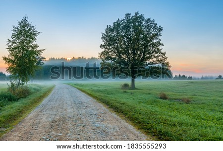 Misty morning at countryside road, European rural landscape at dawn Сток-фото ©