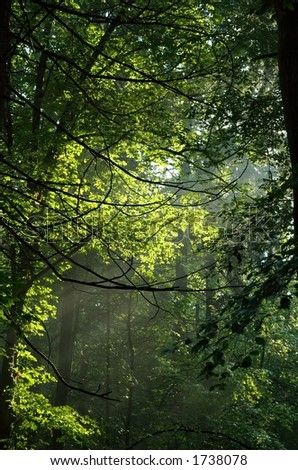 Misty morning deep in the forest.
