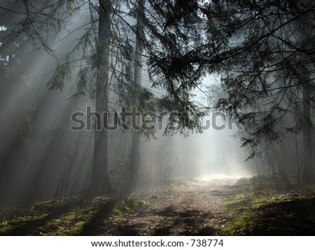 Misty morning deep in the forest, europe,Bialowieza