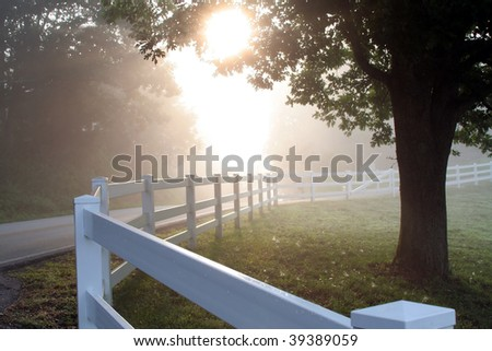 Misty morning fences.