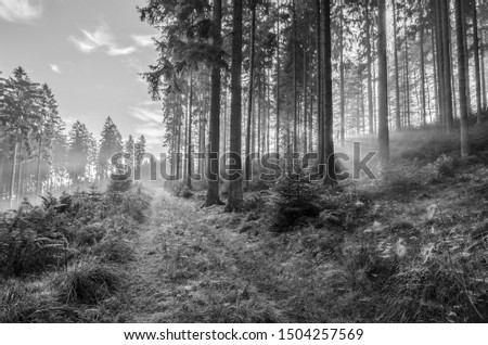 Misty morning in autumn in the forest with sunbeams and lots of spider webs, black and white, Germany #1504257569