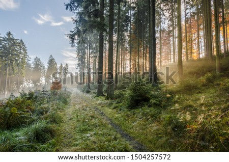 Misty morning in autumn in the forest with sunbeams and lots of spider webs, Germany #1504257572