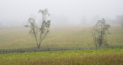 Misty morning in the countryside. Scenic view of the old wooden fence, trees, vegetable garden and pastures in the fog. Foggy rural landscape. Summer in the village.