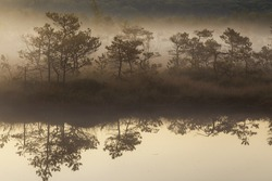Misty morning in the swamp with water reflection