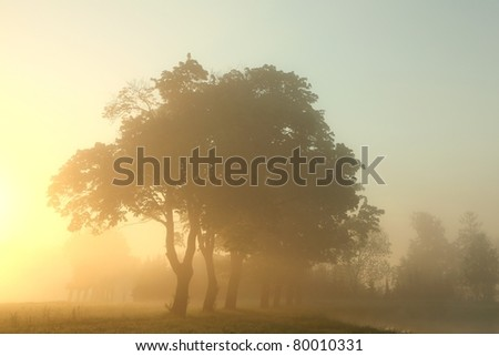 Misty morning with maple trees in the foreground.