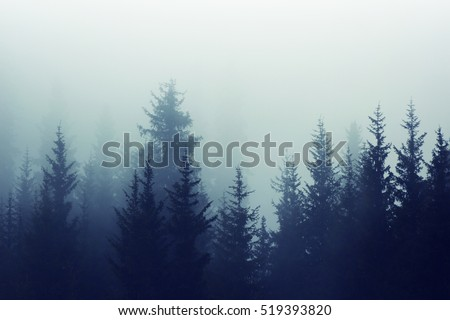 Misty mountain forest. Fog in fir forest on mountain slopes. Color toning.
