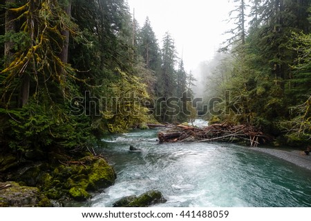 Misty River Through a Forest