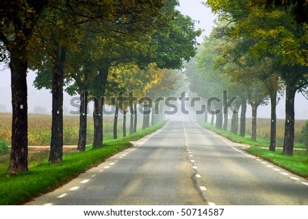 Misty road in Alsace, France, on a foggy summer day