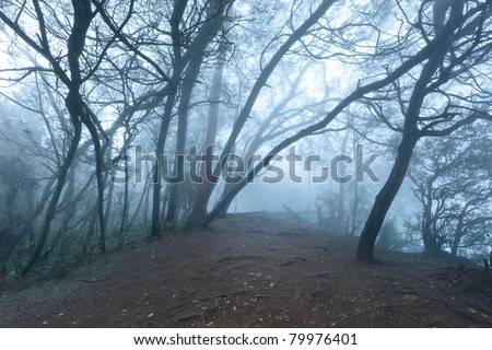 Misty scary forest in thick fog - stock photo