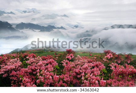 Misty spring mountain with azelea flowers and bushes.