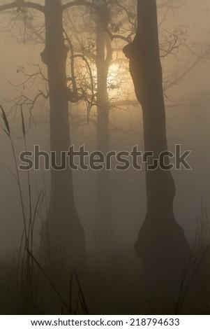 Misty sunrise in Nepali jungle #218794633