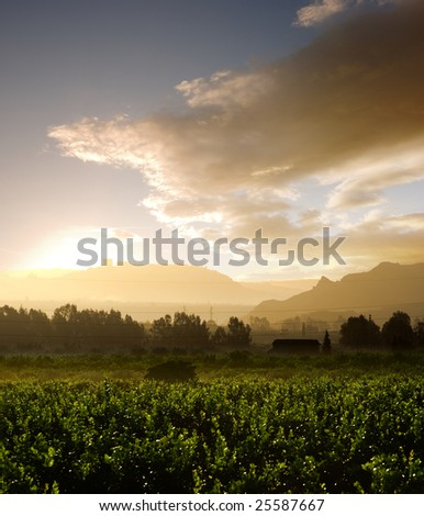 misty sunrise on cultivated area