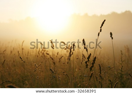 Misty sunrise over grass