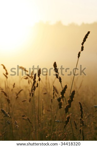 Misty sunrise over grass - stock photo