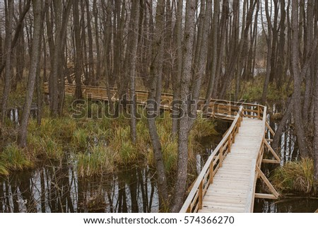 Misty Swamp. Mystic foggy swamp with dead trees. Fényes Tanösvény, Tata, Hungary. Stock fotó ©