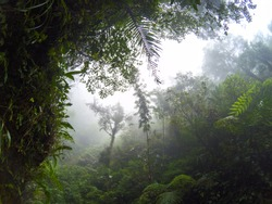 Misty view of tropical jungle and cloudy sky. Wild forest hiking. Rainforest in fog, view from valley between green mountains. Tropical jungle forest calming landscape. Rain season in South Asia